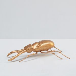 Insect | Beetle | Gold | White Moose