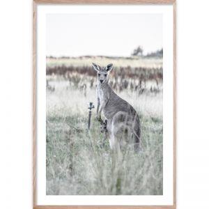 Kangaroo Bond | Giclee Art Print | By Wall Style
