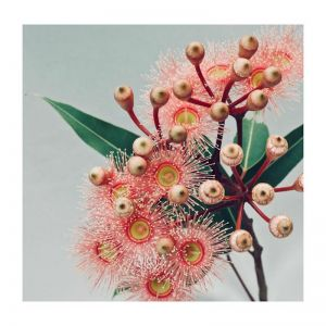 Katie | Photographic Art Print by Flowers for Kate
