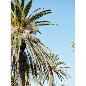 Kilda Palms | Photographic Print by Kristoffer Paulsen