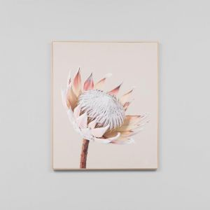 King Protea Portrait 2 | Framed Photographic Canvas Print | by Matthew Thomas