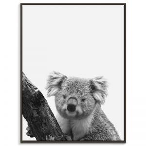 Koala   Canvas or Print by Artist Lane