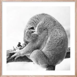 Koala Dreaming | Giclee Art Print | By Wall Style