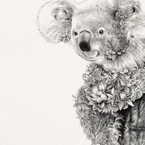 Koala I Limited Edition Giclee Print