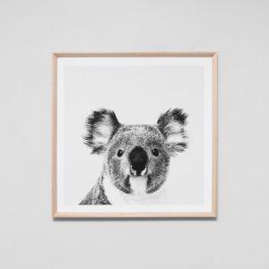 Koala Portrait | Framed Print