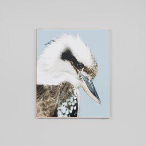 Kookaburra   Canvas
