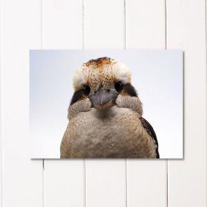 Kookaburra - Fluffy Cheeks | Unframed A3 Print by Amelia Anderson