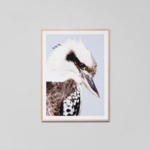Kookaburra | Framed Photographic Print