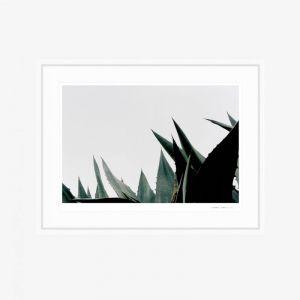 La Jolla Cactus | Fine Art Print | by PHOLIO