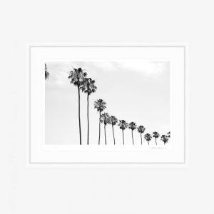 La Jolla Palms | Fine Art Print | by PHOLIO