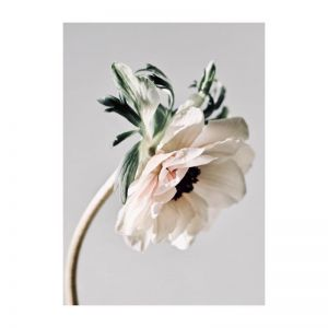Laila | Photographic Art Print by Flowers for Kate
