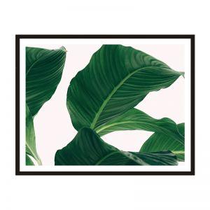Large Leaves | Framed Print | Artefocus