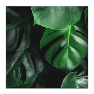 Leafy Green | Prints and Canvas | Photographers Lane