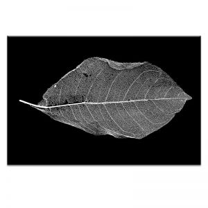 Life Of Leaf | Prints and Canvas by Photographers Lane