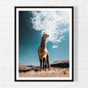 Llama | Framed Print | Artefocus