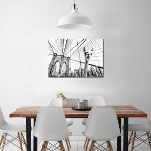 Llama In Brooklyn 2 | Canvas Print by United Interiors