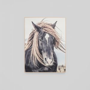 Lone Mustang | Framed Canvas
