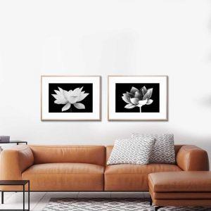 Lotus Me 2 & Lotus Me   Framed Prints   by United Interiors
