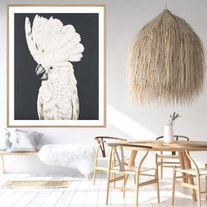 Luke The Cockatoo / Framed Print / P5015 / Colour Clash Studio