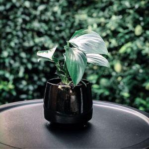 Lux Black Speckled Pot