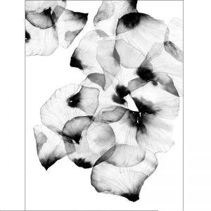 Magdalena Tyboni | Wallmo Art Print