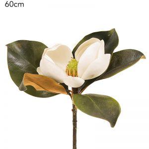 Magnolia Stem   White - 12 Stems
