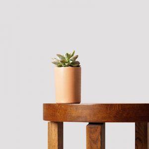 Manda Succulent + Pot