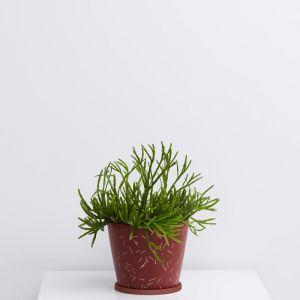 Match Stick Small Original Pot | Garnet | by Capra Designs