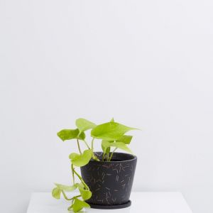 Match Stick Small Original Pot | Midnight | by Capra Designs
