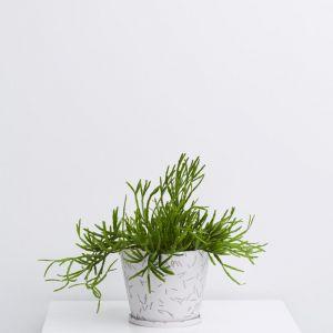 Match Stick Small Original Pot | White | by Capra Designs