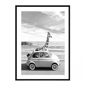 Minor Giraffe | Black Frame | Front View