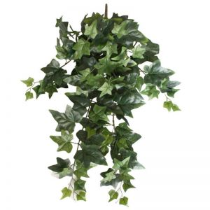 Mixed Ivy Hanging Bush | 70cm