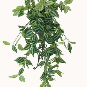 Mixed White and Green Hanging Philodendron Bush | 80cm