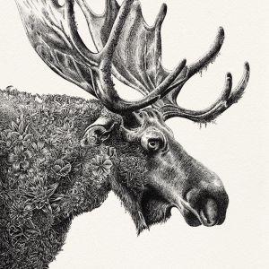 Moose | Limited Edition Giclée Print