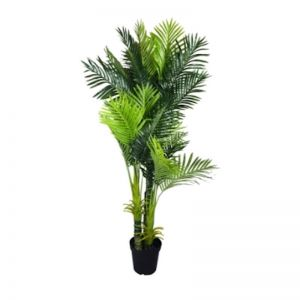 Multi Trunk Hawaii Palm 180cm