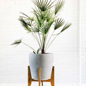 Murakami Plant Stand