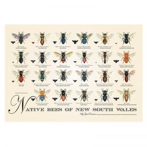 Native Bees of NSW Poster