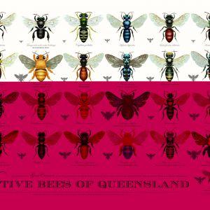 Native Bees of Queensland Poster