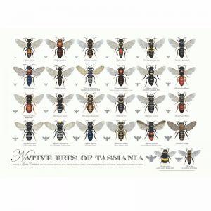 Native Bees of Tasmania Poster