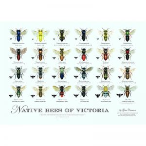 Native Bees of Victoria Poster