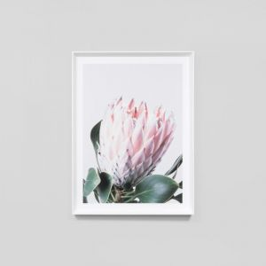Native Protea | Framed Print