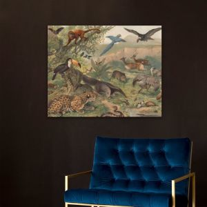 Neotropical Fauna Lithograph | Stretched Canvas | Printed Panel