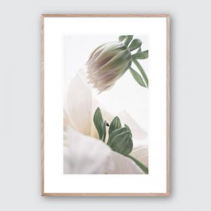Oh Dahlia no.1 | Limited Edition Framed Giclee Art Print