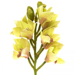 Orchid Cymbidium Spray