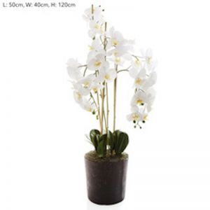 Orchid in Paper Pot | White