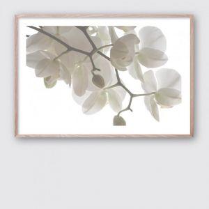 Orchid Light 1 | Framed Giclee Art Print