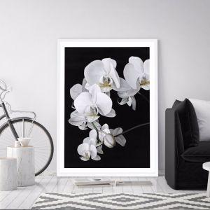 Orchid Premium Art Print (Various Sizes)