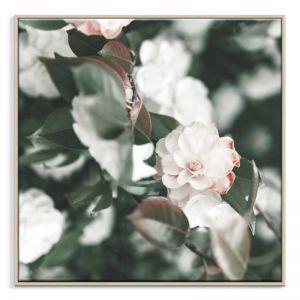 Pale Petals   Canvas or Print   Framed or Unframed