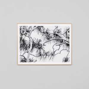 PALM BREEZE | Framed Photographic Print