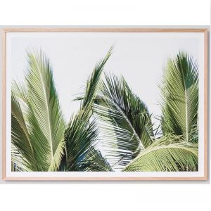 Palm Fronds | Framed Photograph